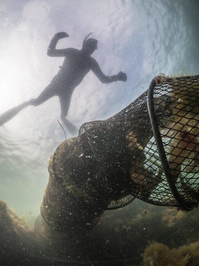 En sorglig syn mötte dykarna, i sammanslutningen Divers Against Ghost Nets, när de dök i Hönö Hedens hamn. Foto: förmedlade av Palle Hultsbo